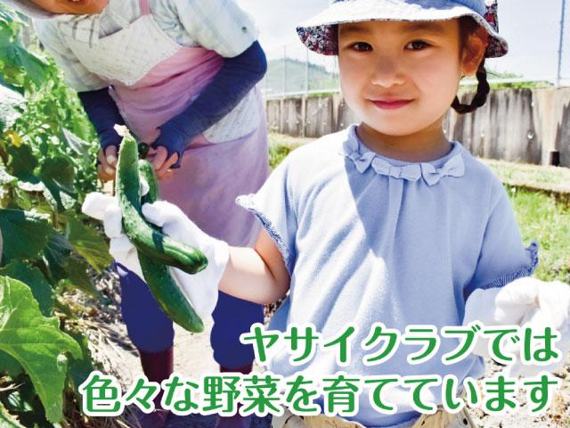 ヤサイクラブ - できる野菜